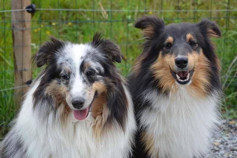 prix couche pour chien