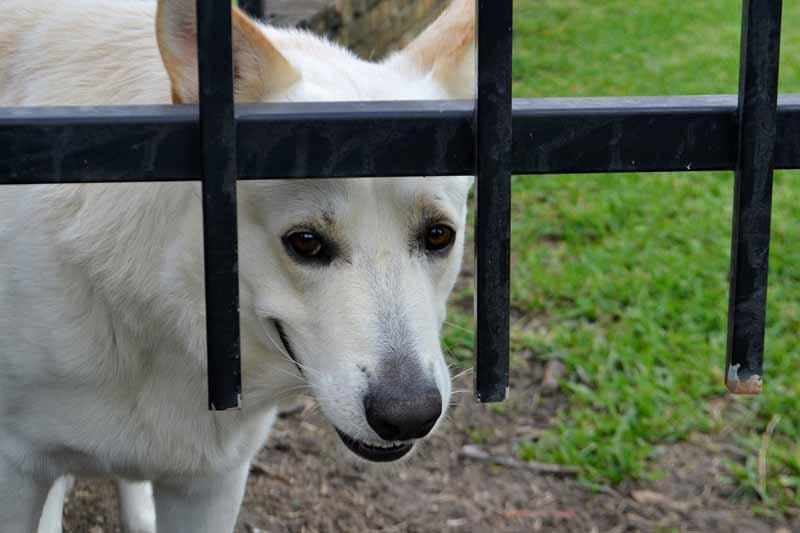 prix enclos pour chien