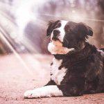 protéger son chien du soleil