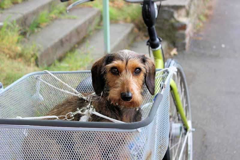 remorque velo pour chien pas cher