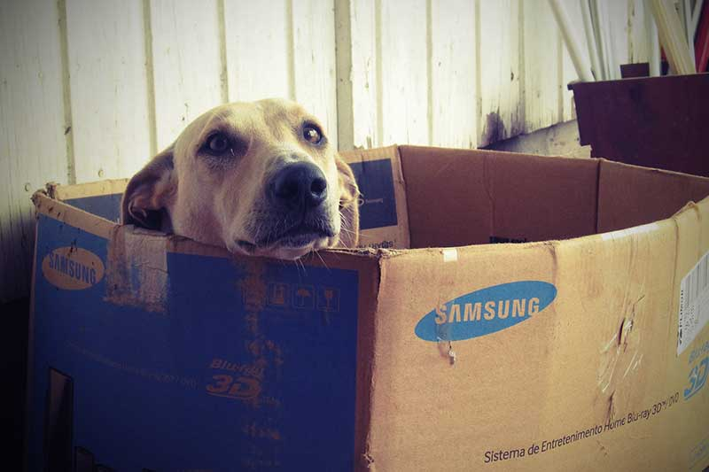 test cage pour chien