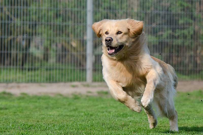 test chenil pour chien