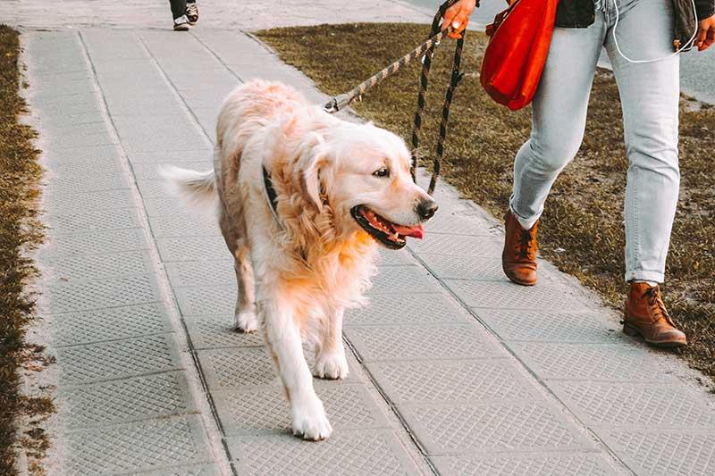 test corde laisse pour chien