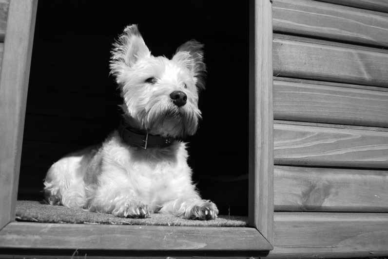 test enclos pour chien