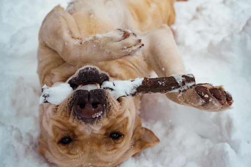 test gps chien