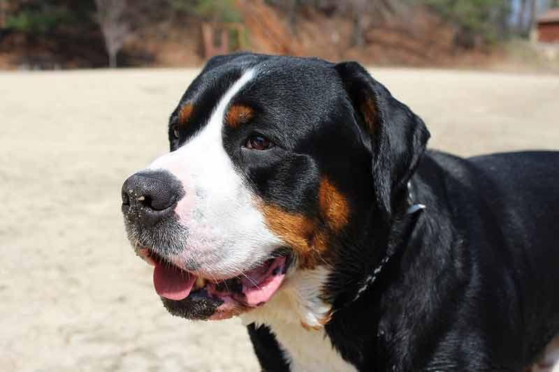 test manteau rafraichissant pour chien
