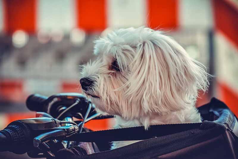 test remorque velo pour chien