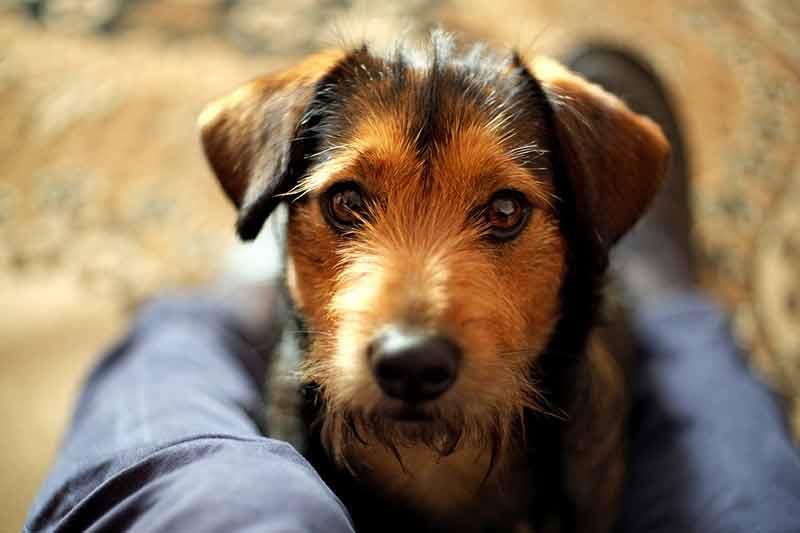 test tondeuse pour chien