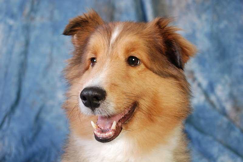 tondeuse pour chien pas cher