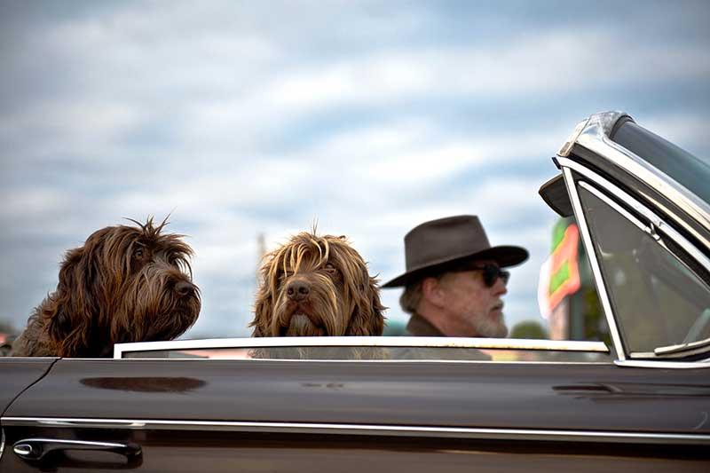 Transporter son chien : les accessoires à posséder