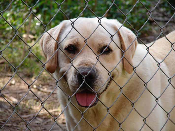 Comment habituer son chien au chenil ?