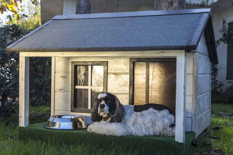 Où placer le chenil de son chien ?