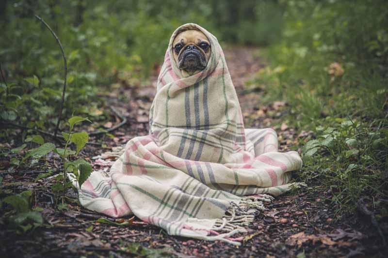 Comment habituer son chien au gilet ?