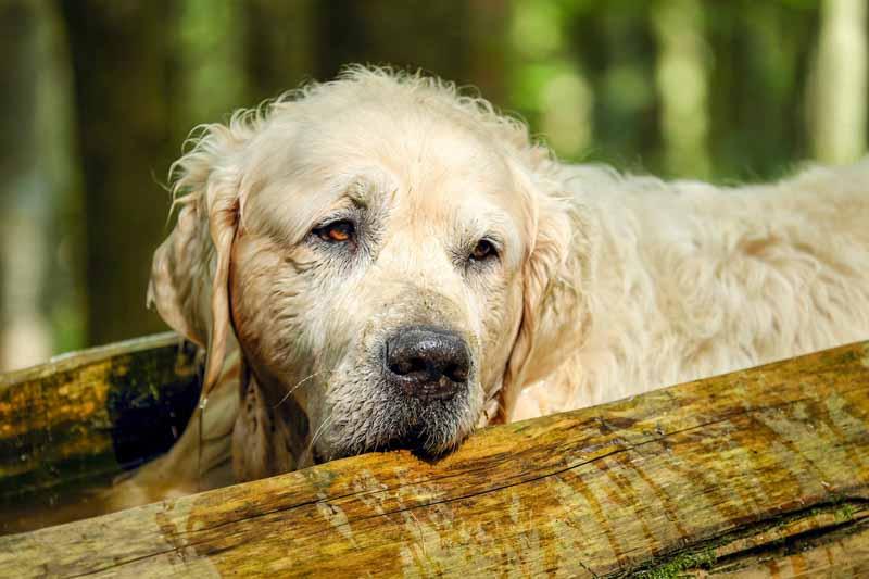 Quelle matière choisir pour un gilet pour chien ?