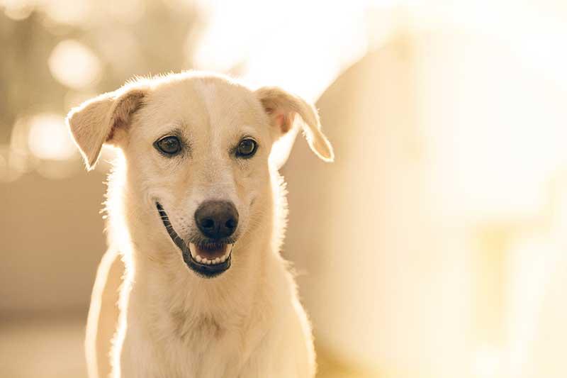 comment choisir enclos pour chien