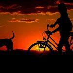 comment choisir remorque velo chien