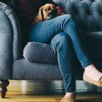 comment empecher chien monter canape
