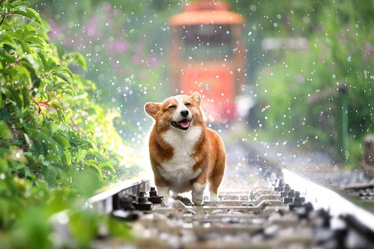 temps-dure-chaleur-chienne