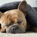 chien qui ne veut pas descendre du canapé