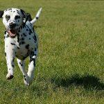 collier gps pour chien utilité