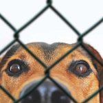 nettoyer un enclos pour chien