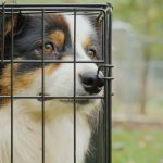 taille cage chien