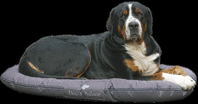 Le coussin orthopédique pour chien