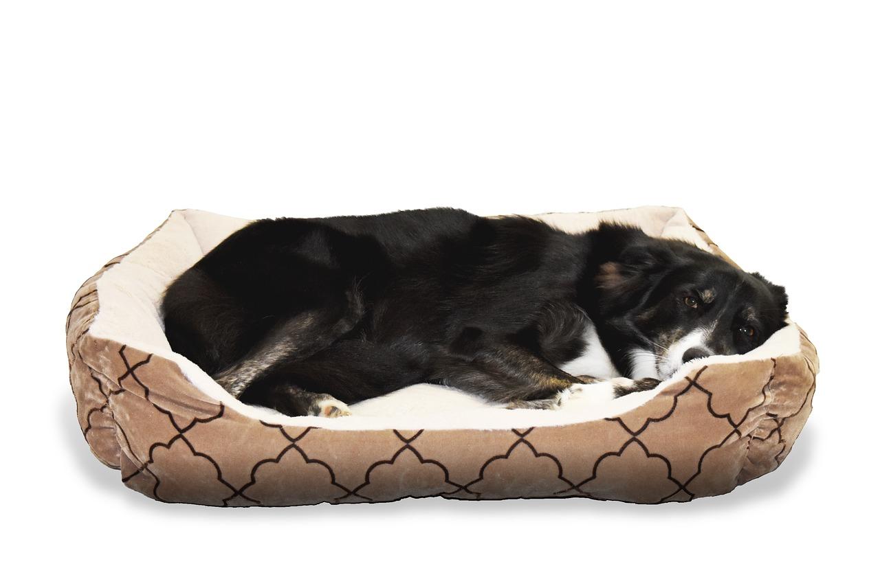 Consultez notre comparatif des meilleurs lits orthopédiques pour chien pour dénicher plus facilement le produit qu'il vous faut. Découvrez aussi notre guide d'achat.