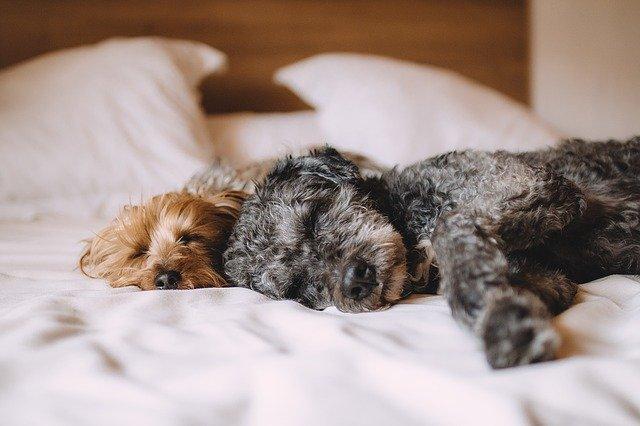 meilleurs lits orthopédiques pour chien