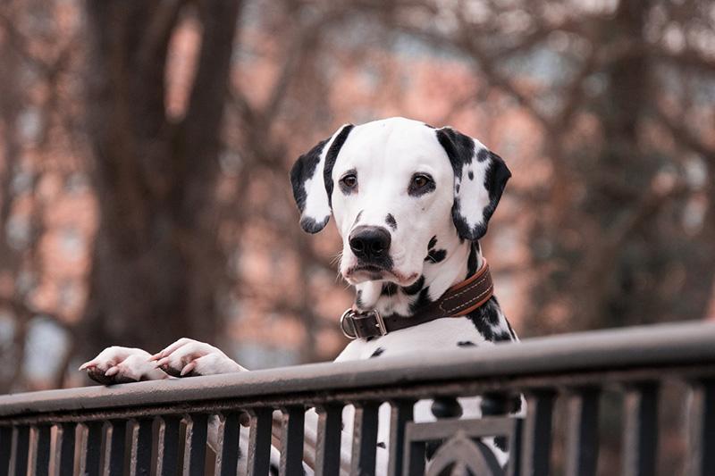 Top 6 du meilleur fauteuil roulant pour chien