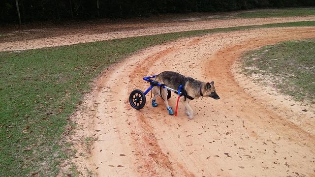 meilleur fauteuil roulant pour chien