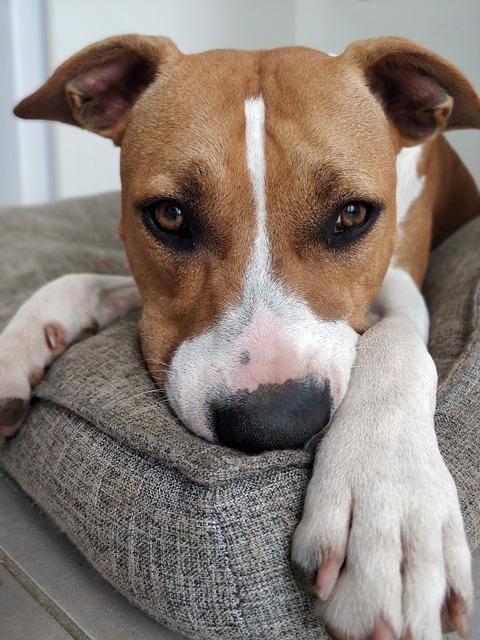Les différents types de coussins antistress pour chien