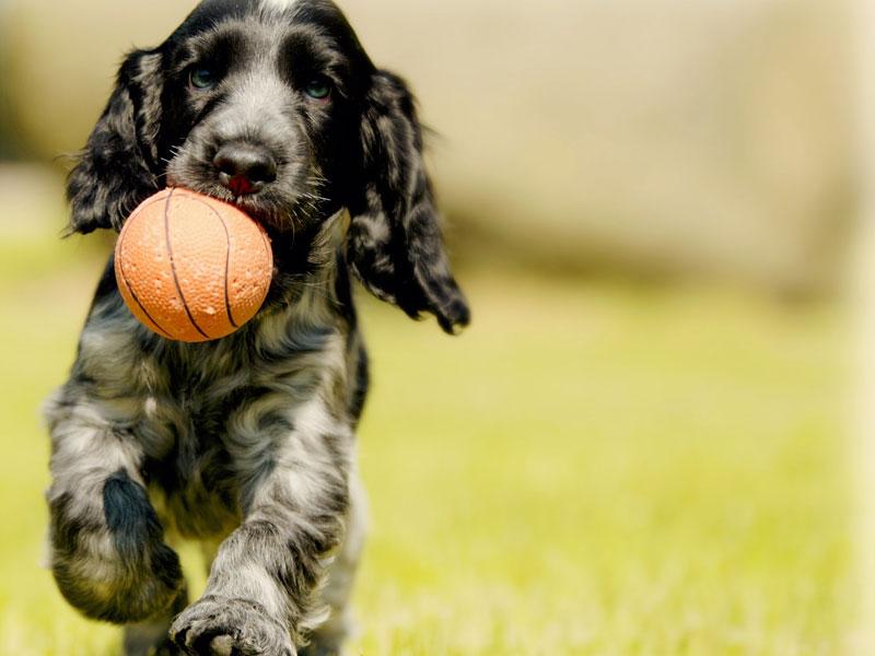 chien ball pour chien