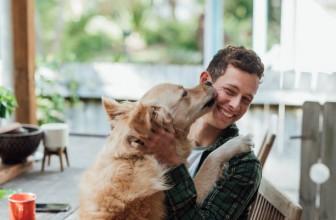 Comment calmer un chien hyper sensible ?
