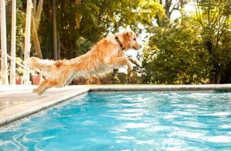 Comment empêcher mon chien d'aller dans la piscine ?