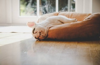 Combien de temps dort un chien par jour ?