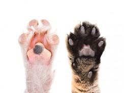 Coussinet de chien ouvert : comment en prendre soin ?