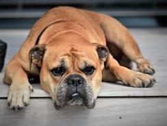 Comment bien nourrir son chien au quotidien ?
