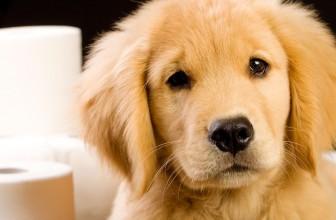 Comment soigner son chien de la diarrhée ?