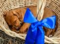 Comment apprendre à son chien à aller au panier?