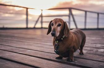 Les avantages de la clôture électrique pour chien