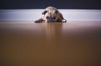 Les avantages de l'enclos pour chien