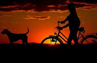 Les avantages du gilet pour chien