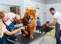 Les avantages de la tondeuse pour chien ?