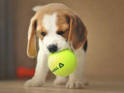 Meilleur lanceur de balles pour chien