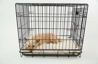 Mon chien a peur de sa cage : que faire ?