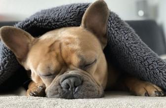 Mon chien ne veut pas descendre du canapé : que faire ?
