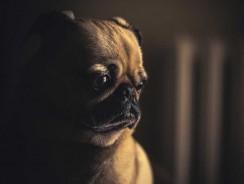 Mon chien a peur de la caisse de transport : que faire ?