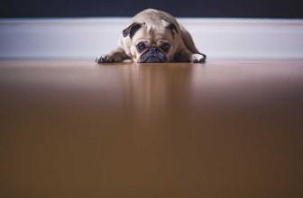 Mon chien a peur de sa gamelle : que faire ?