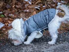 Mon chien refuse de sortir avec un manteau : que faire ?